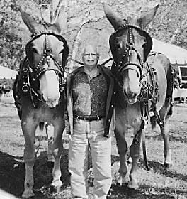 Мулы Аполло и Анак, фото фотография самые животные