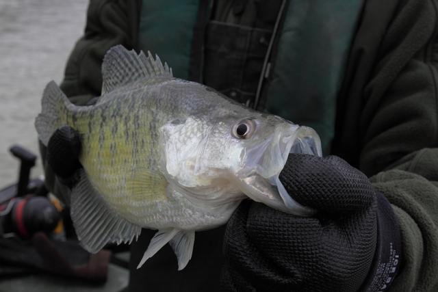 Ky afield outdoors crappie stockings add to great fall for Crappie fishing ohio